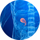 Ícone Vesícula | Clínica Hepatogastro
