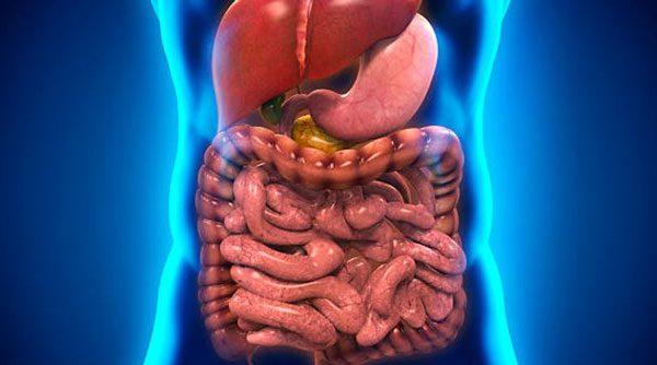 intestino-hepatogastro